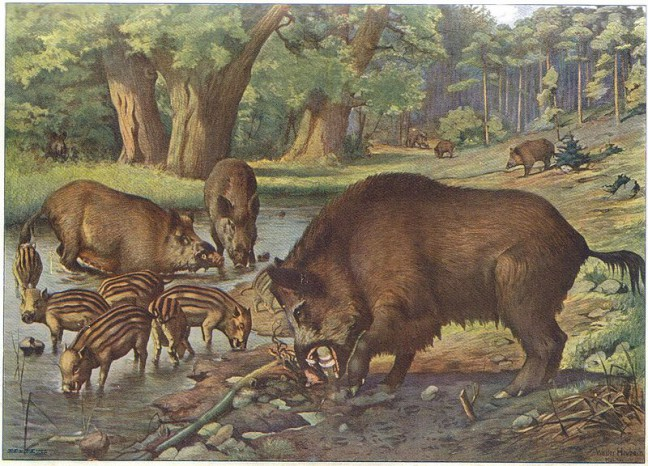 Wild Boars Painting