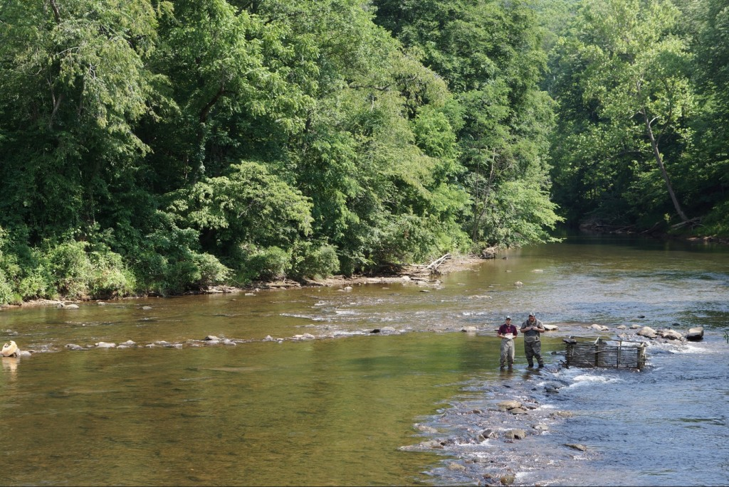 U.S. Fish and Wildlife employees ready a modern trap at the bottom of a Cherokee fishing weir on the Tuckasegee River.