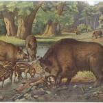 European Wild Boars