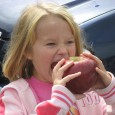 Apples are a traditional and valuable part of our heritage in North Carolina. The most popular varieties nationwide--Red Delicious, Golden Delicious, and Gala--are grown here. In the western part of the state over 10,000 acres of orchards produce 75,000 tons of apples every year.
