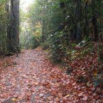 Linville Falls Trails